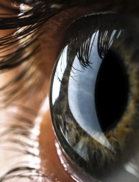 das Auge ist wertvoll - Optiker Moldaschl in Wolkersdorf